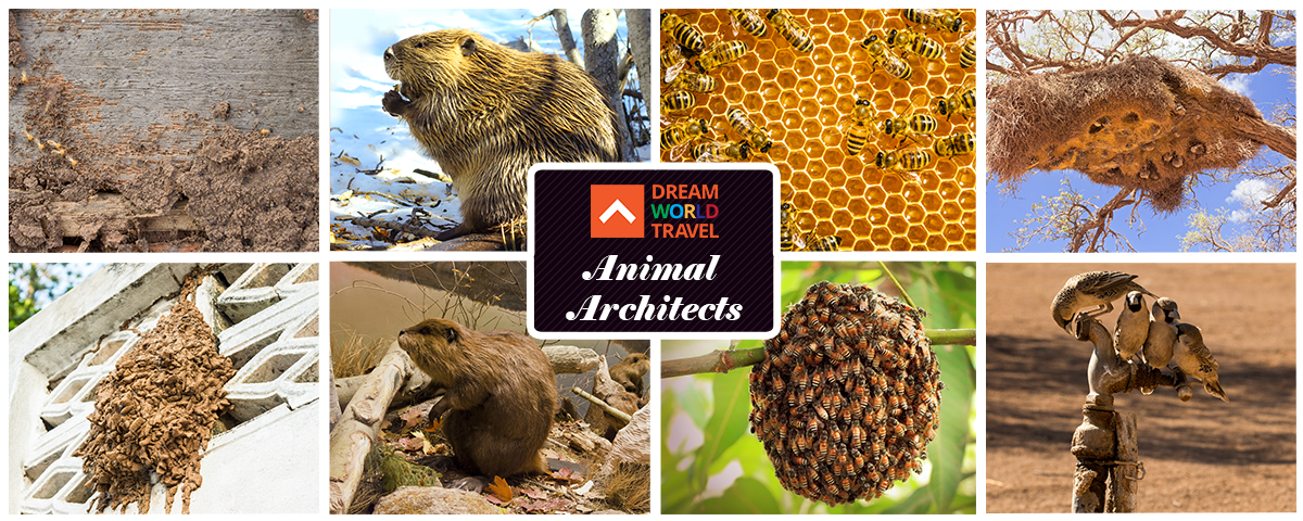 Animal_Architects[1]